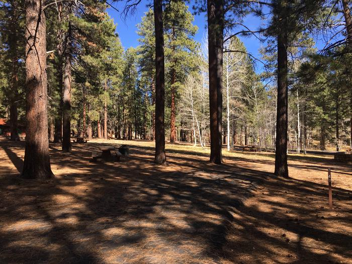 Picnic table, fire pit, and driveway for North Rim Campground, Site 49.