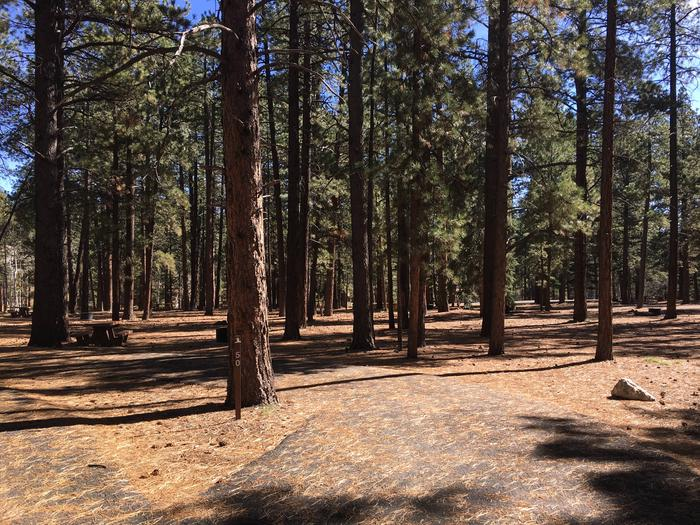 Picnic table, fire pit, and driveway for North Rim Campground, Site 50.