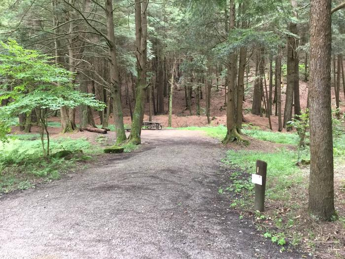Kelly Pines Campground: Site 1