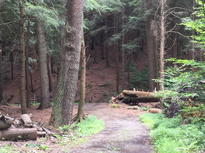 Kelly Pines Campground: Site 2