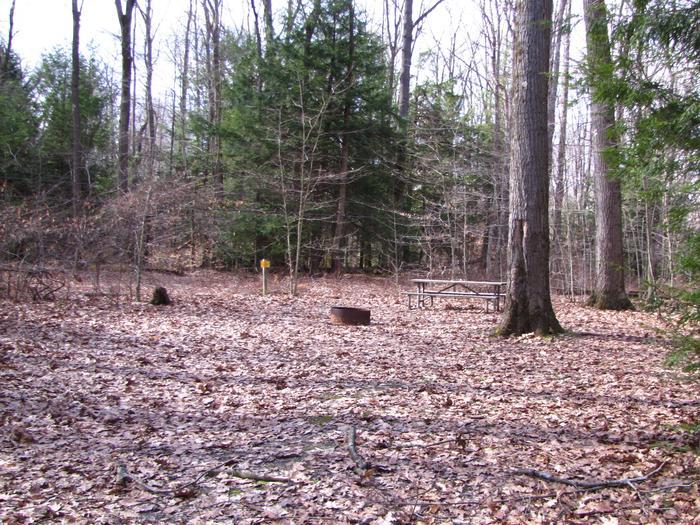 Hearts Content Recreation Area: Site 7