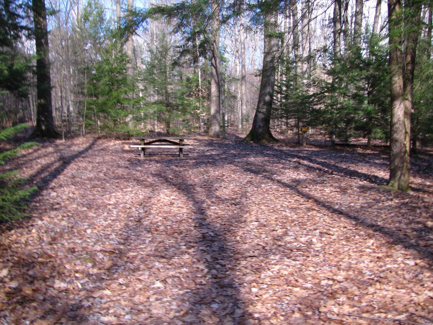 Hearts Content Recreation Area: Site 8