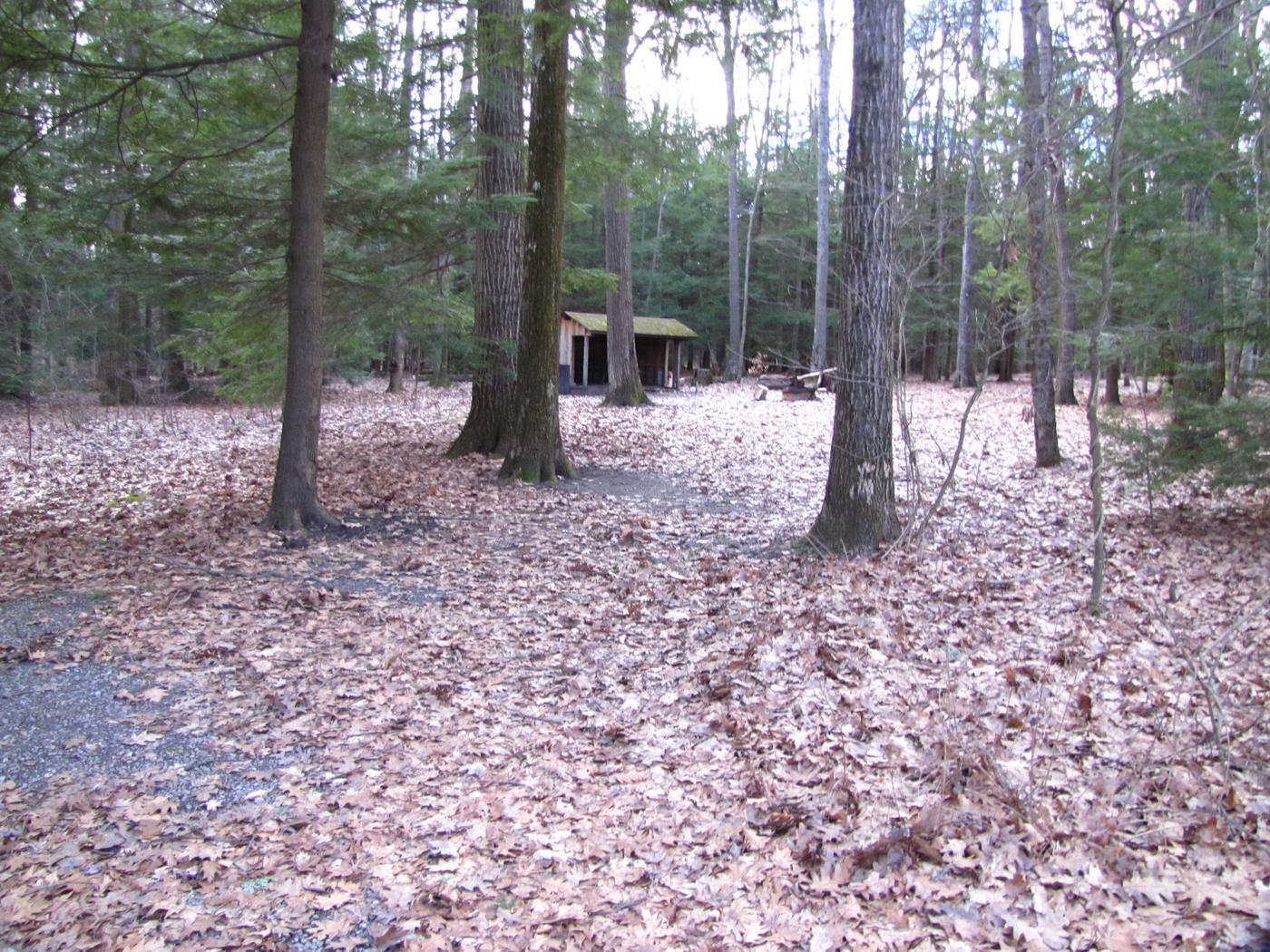 Hearts Content Recreation Area: Site 12