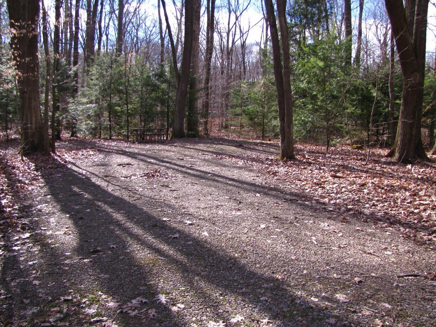 Hearts Content Recreation Area: Site 20