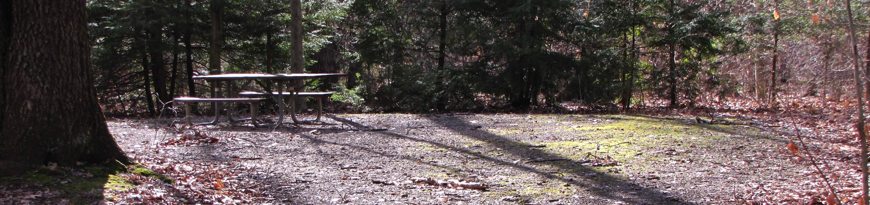 Hearts Content Recreation Area: Site 21