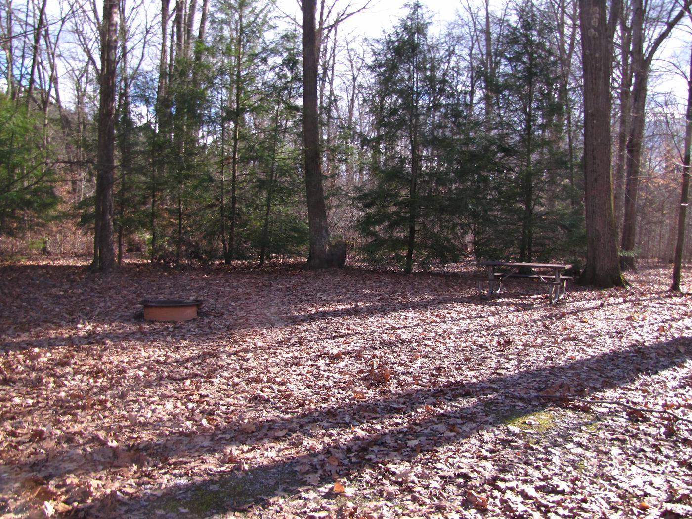 Hearts Content Recreation Area: Site 24