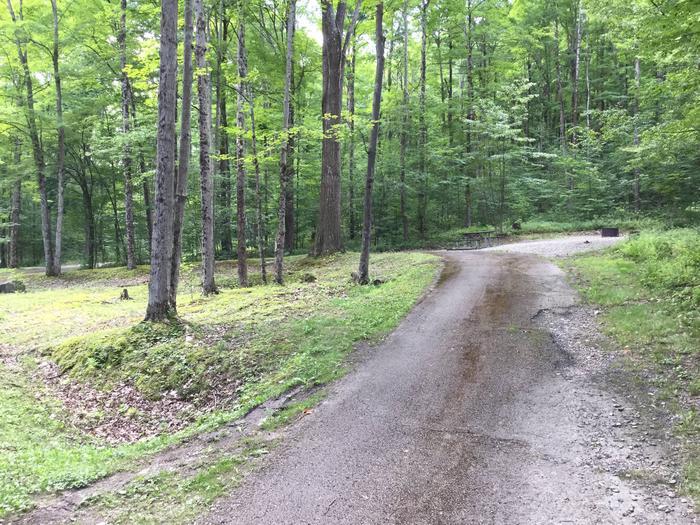 Kiasutha Recreation Area: Site 11