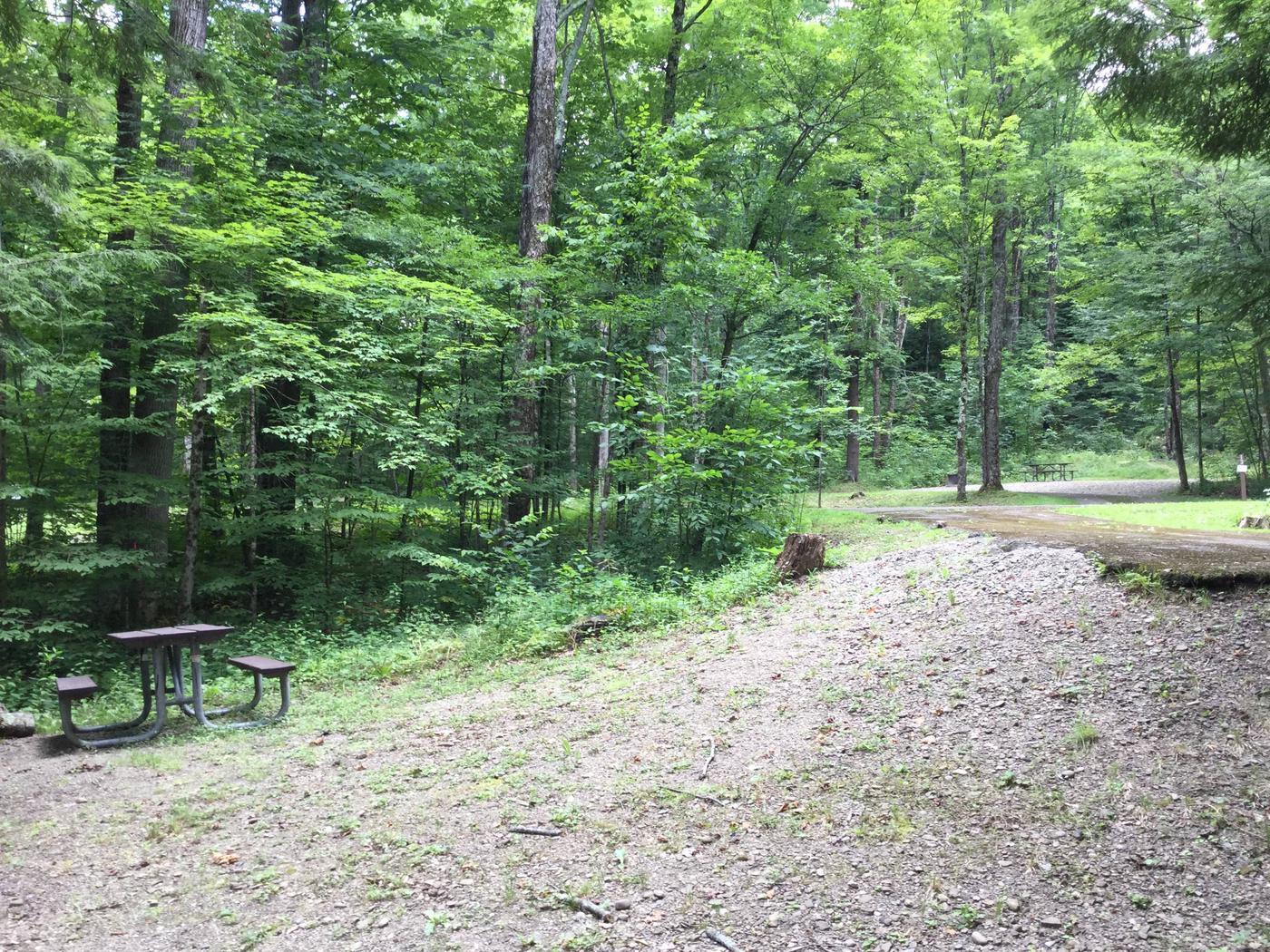 Kiasutha Recreation Area: Site 12