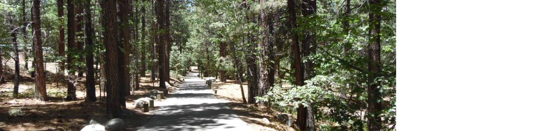 Scenic Road in PineknotScenic road in pineknot