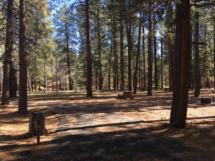 Picnic table, fire pit, and driveway for North Rim Campground, Site 51.