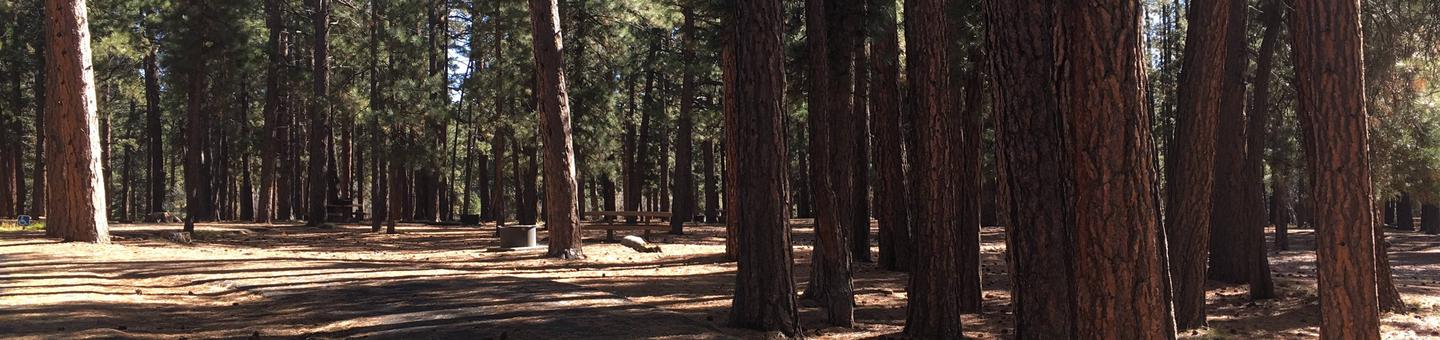 Picnic table, fire pit, and driveway for North Rim Campground, Site 55.