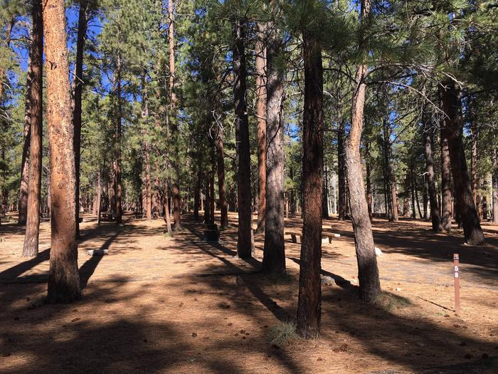 Picnic table, fire pit, and driveway for North Rim Campground, Site 58.
