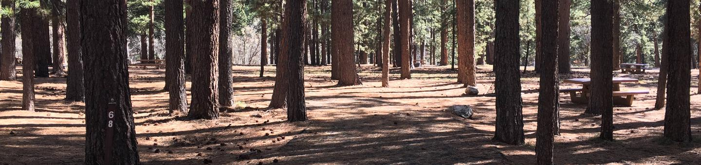 Picnic table, fire pit, and driveway for North Rim Campground, Site 68.