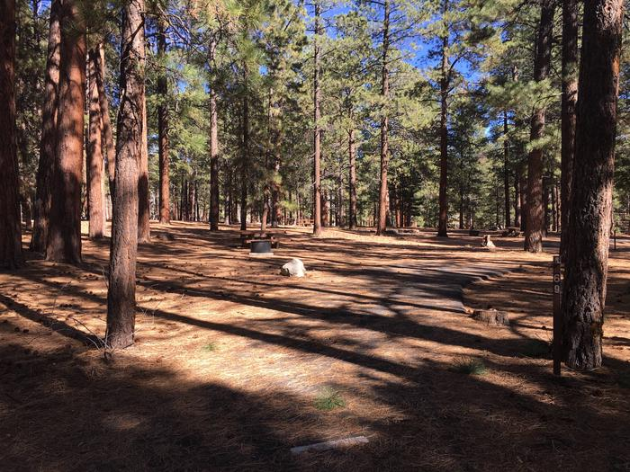 Picnic table, fire pit, and driveway for North Rim Campground, Site 69.