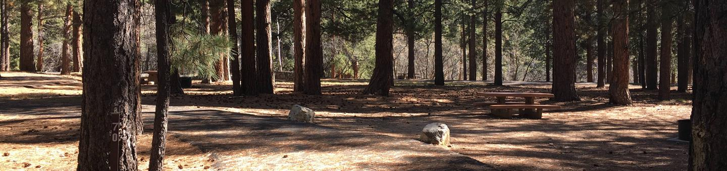 Picnic table, fire pit, and driveway for North Rim Campground, Site 70.