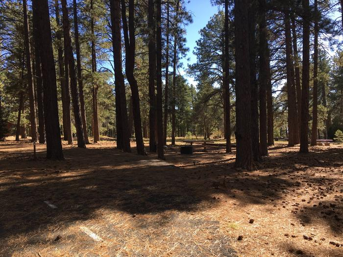 Picnic table, fire pit, and driveway for North Rim Campground, Site 74.