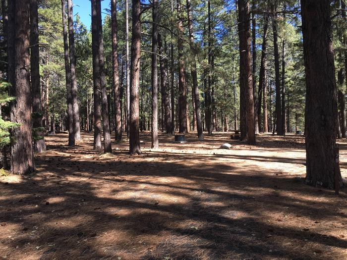 Picnic table, fire pit, and driveway for North Rim Campground, Site 75.