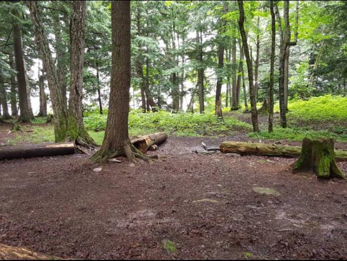 Cedar 1 Campsite photo.Large hemlocks, not much underbrush, and room at the campsite for no more than two tents.