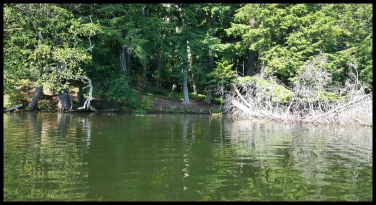 Porcupine 1 Landing photo.A landing with a lot of weeds, sandy, and several downed trees in the water.