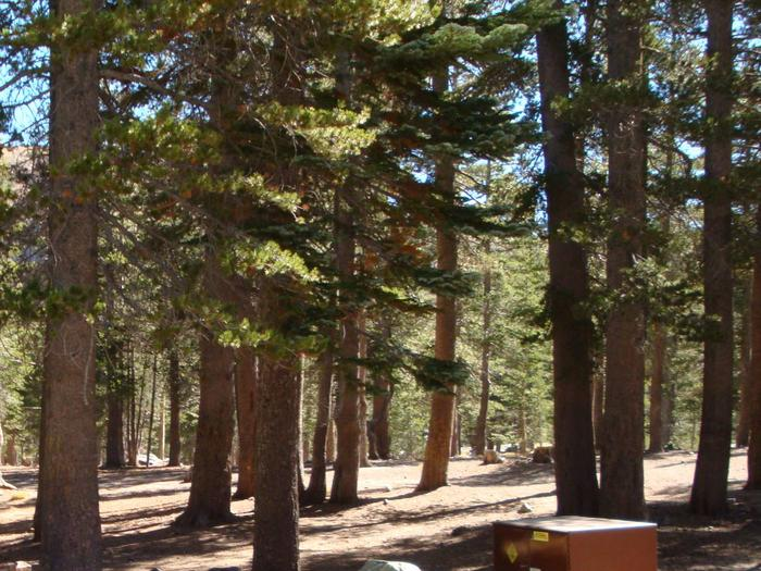 Lake Mary Campground SITE 29