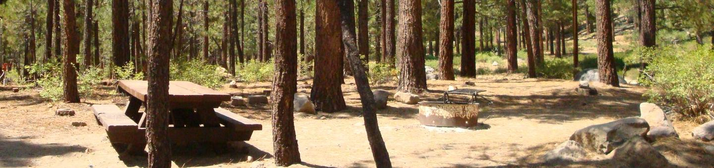 Old Shady Rest Campground SITE 1