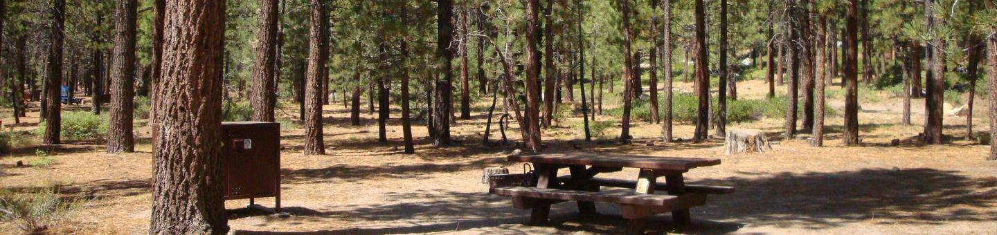 Old Shady Rest Campground SITE 6