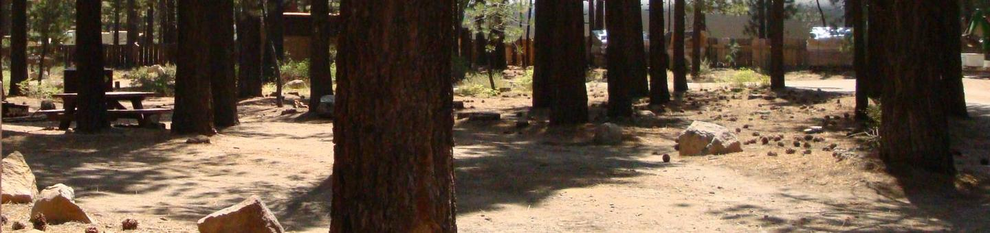 Old Shady Rest Campground SITE 24