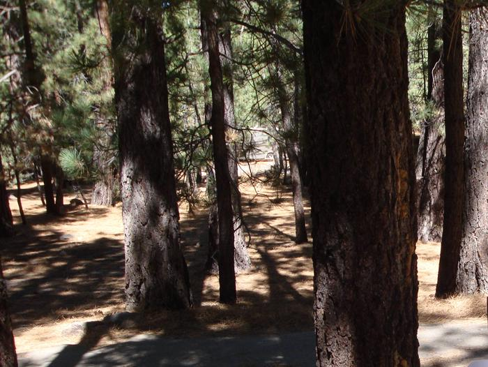 New Shady Rest Campground SITE 88