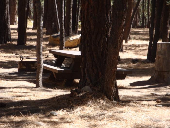 New Shady Rest Campground SITE 91