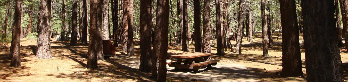 New Shady Rest Campground SITE 104