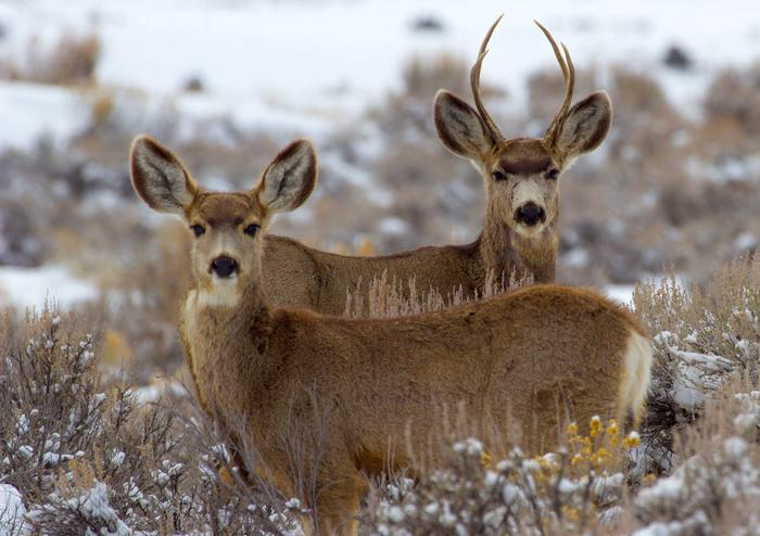 Wildlife in Curecanti National Recreation Area