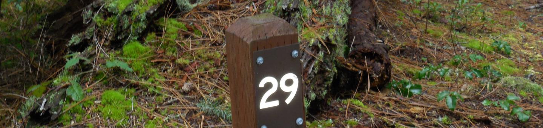 Site#29