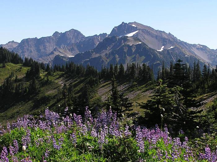 Preview photo of Olympic National Park Wilderness Permit