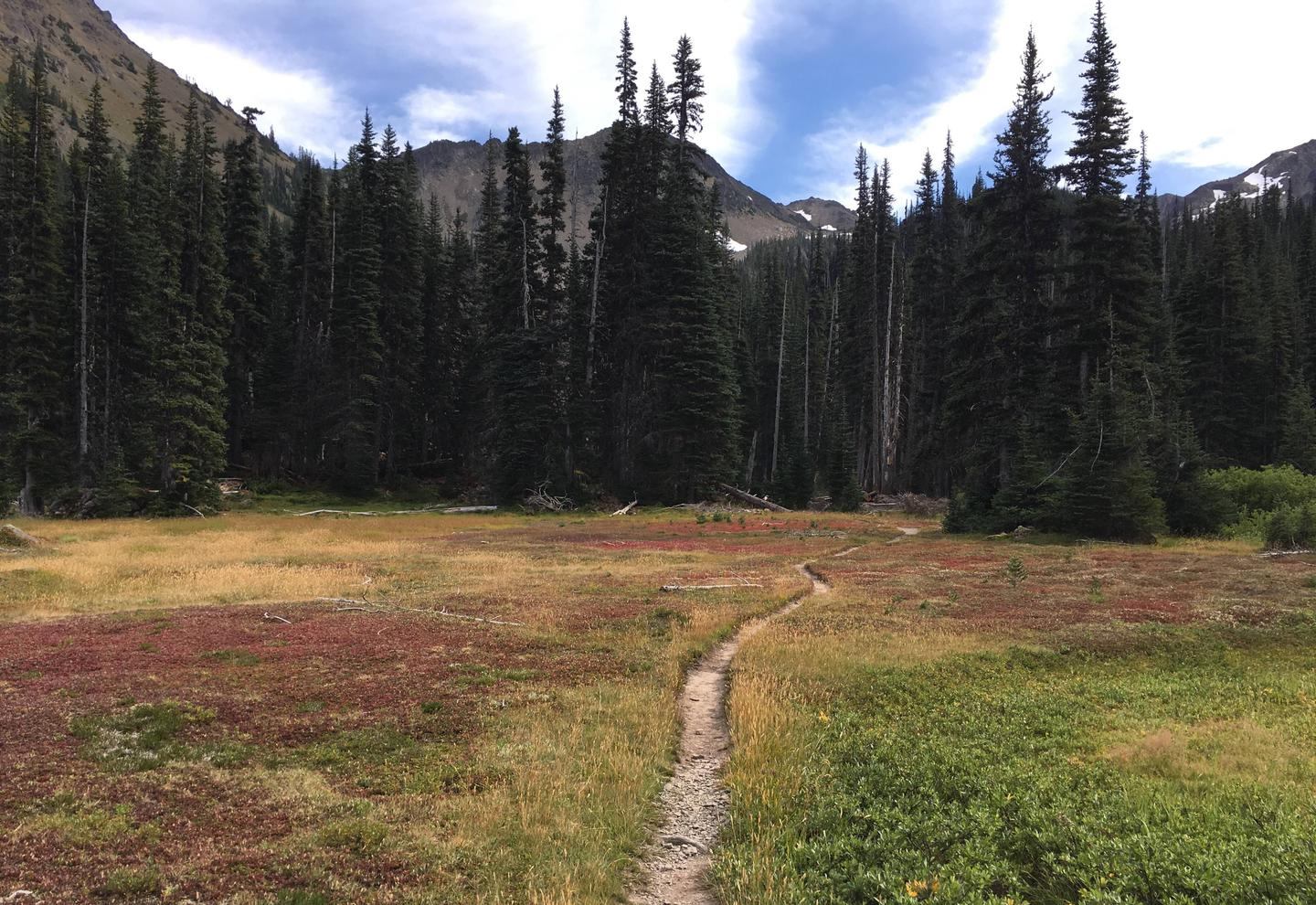 Subalpine meadow surrounded by trees and mountain peaksLower Royal Meadow