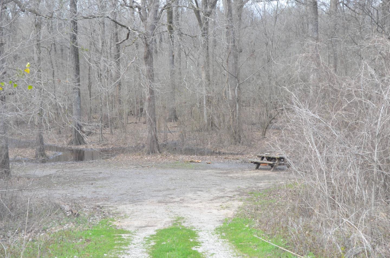 Dummyline Road Campsite 66