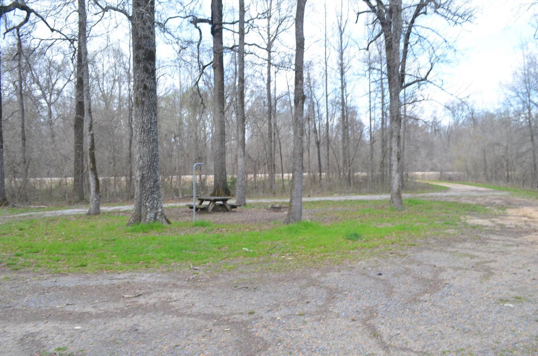Dummyline Road Campsite 67