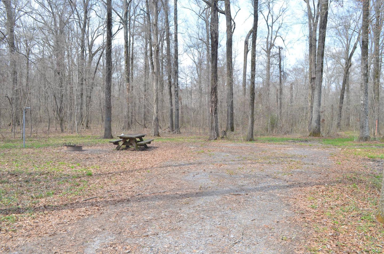 Dummyline Road Campsite 68