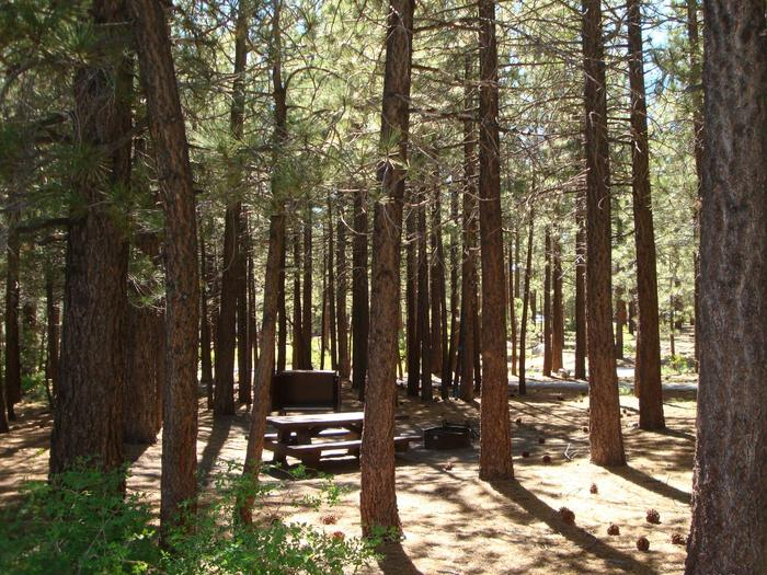 New Shady Rest Campground SITE 113