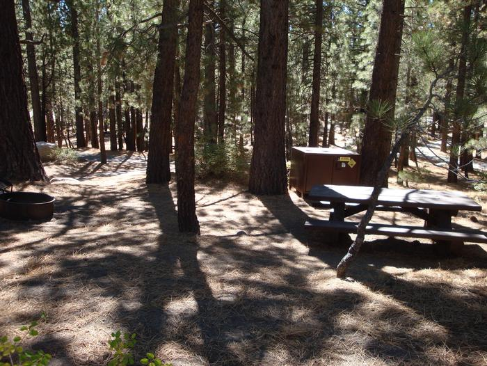 New Shady Rest Campground SITE 160
