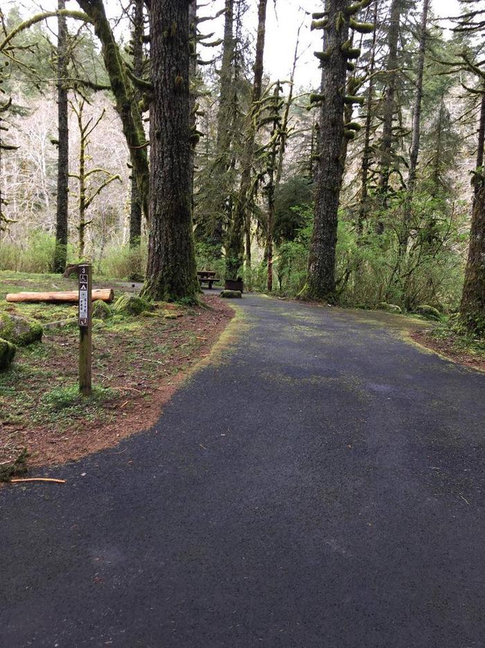 Hebo Lake Campground Site 3