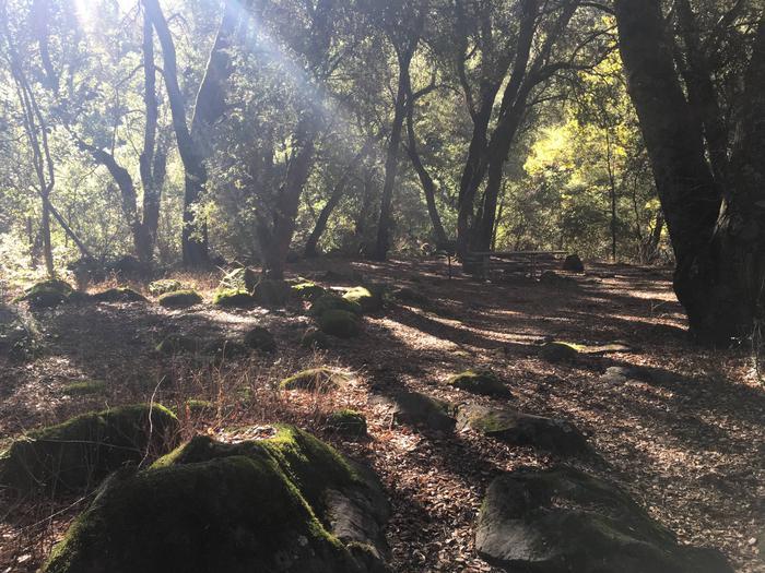 Ponderosa Campground Site 23