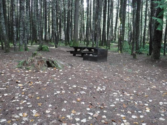 Toketee Lake Campground B 15