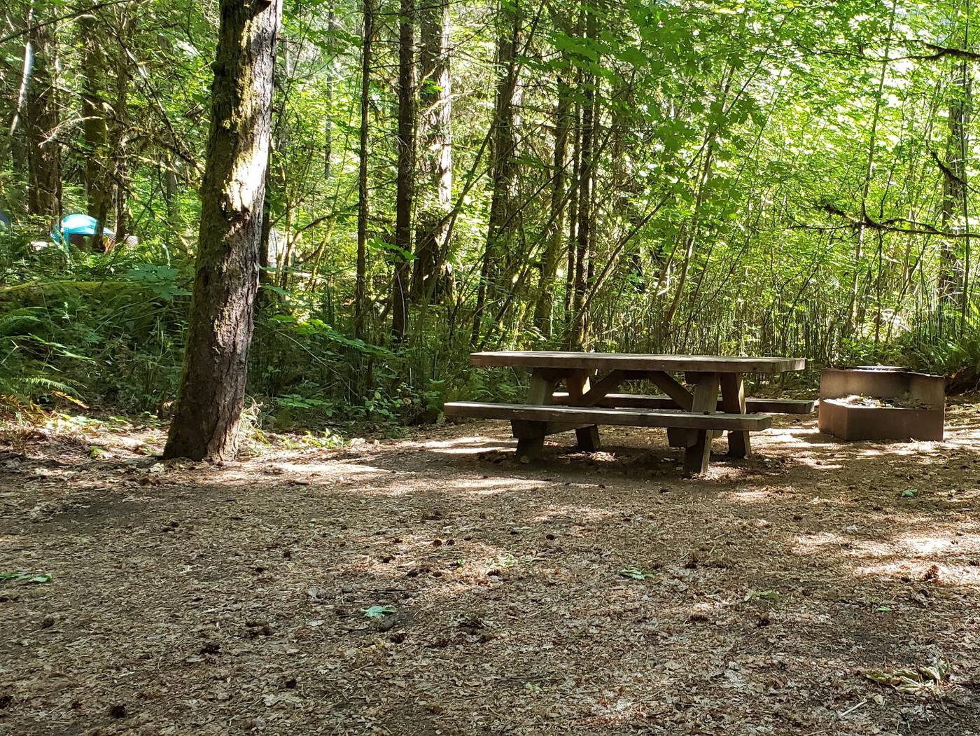 Flat campsite with one picnic table and fire ring.011