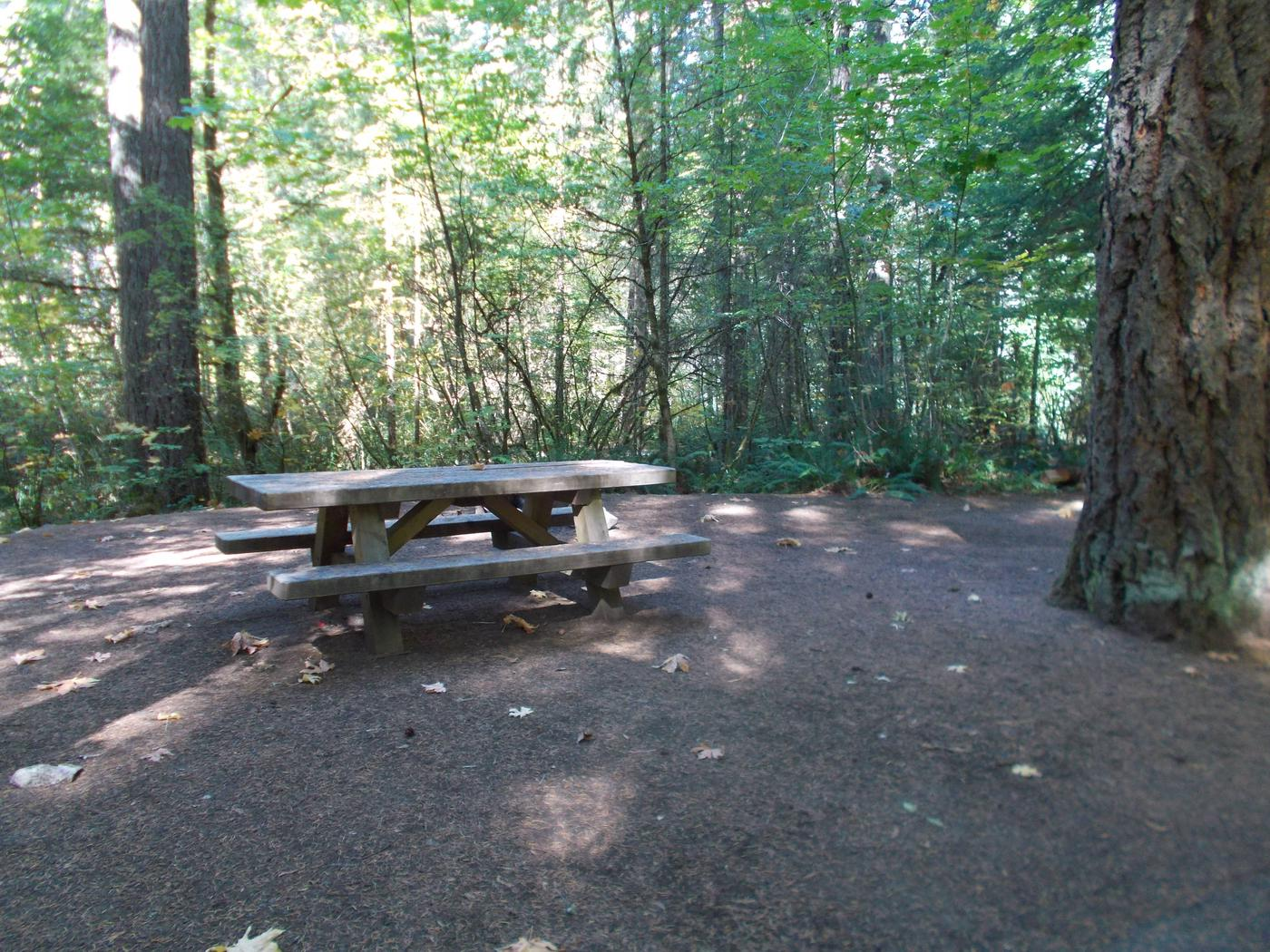 Flat campsite with one picnic table and fire ring.012