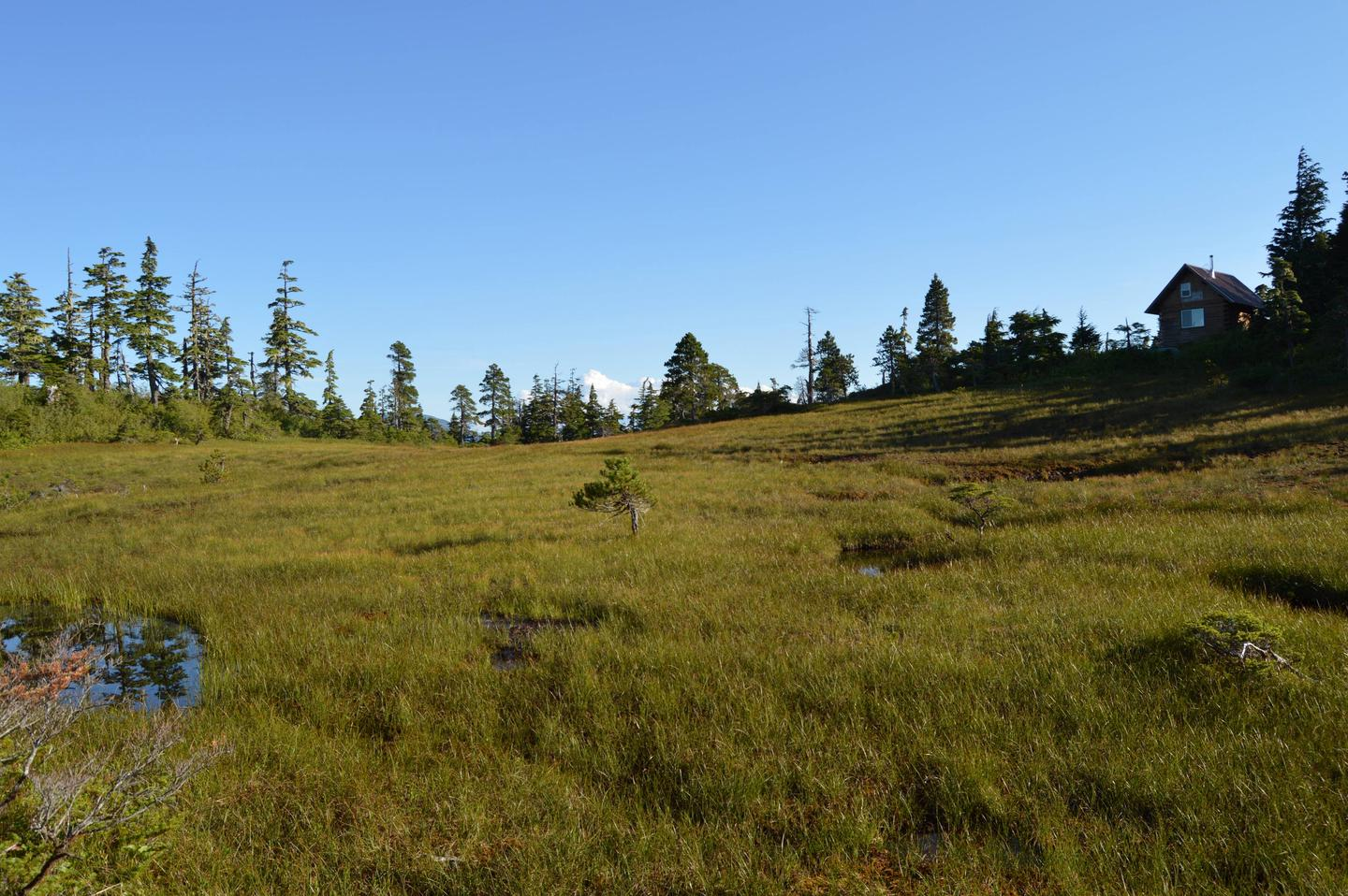 Muskeg behind the cabin