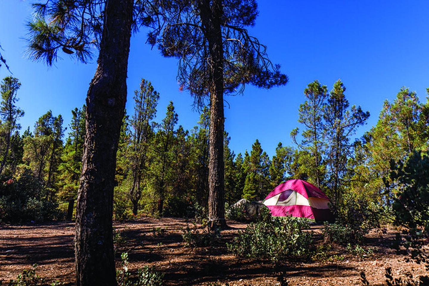 North Cow Mountain Camping