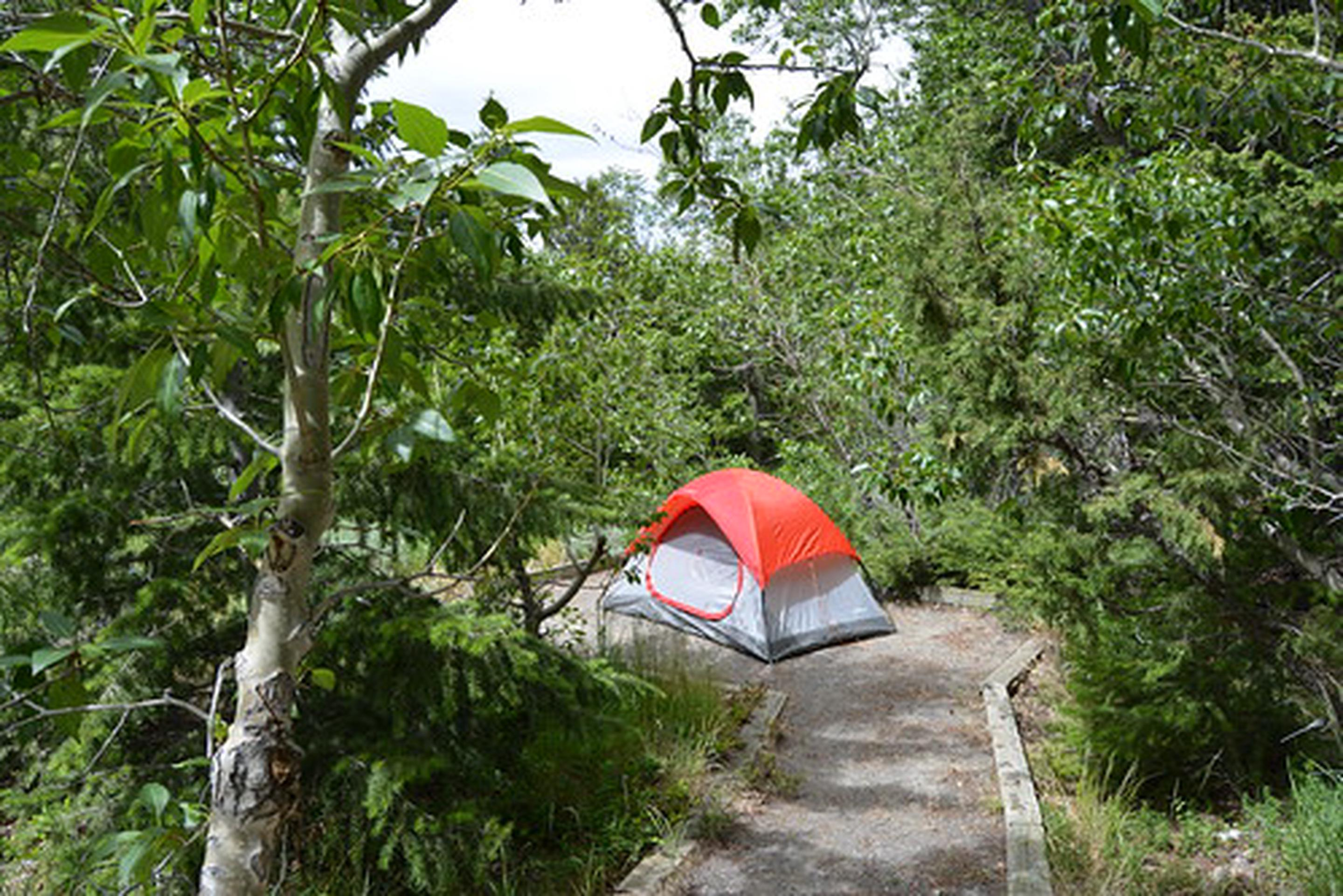 Photo of campsite with tent