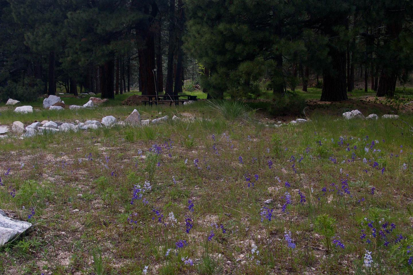 Grassy areas lead you to sites surrounded by pine trees with picnic tables, BBQ stand and tents pads.Elks Flat Campground
