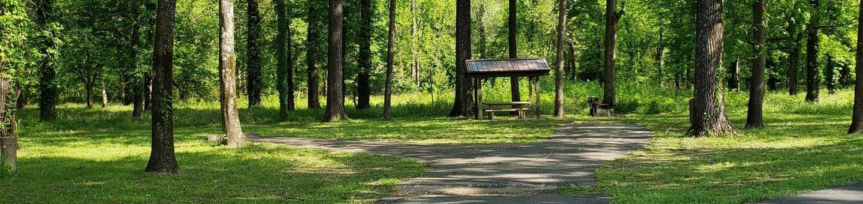 Campsite A26Back-in site