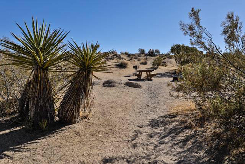Jumbo Rocks site 30Path to campsite